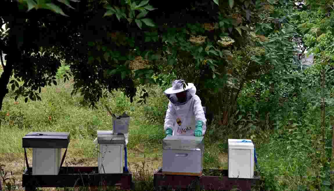 """Les néonicotinoïdes, ces insecticides """"tueurs d'abeilles"""""""