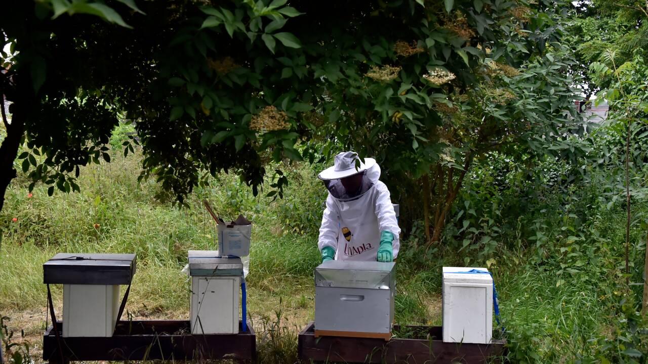 """Zoom sur les néonicotinoïdes, ces insecticides """"tueurs d'abeilles"""""""