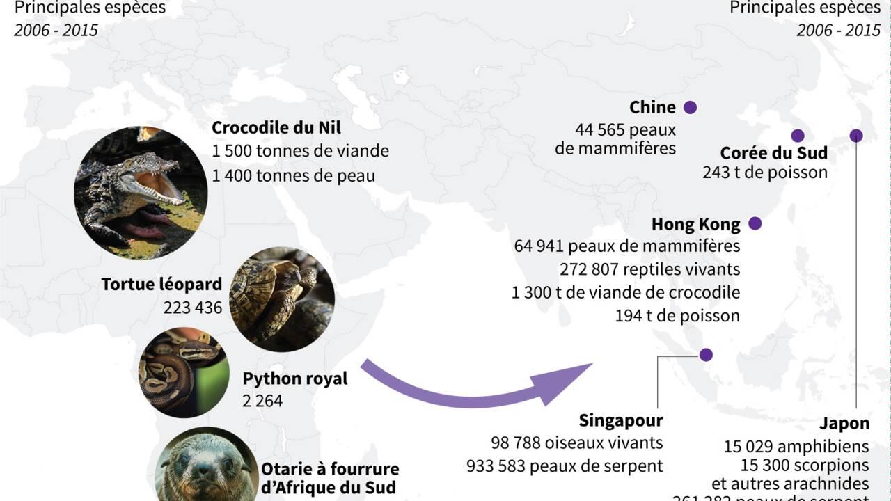 En Asie, les importations d'animaux africains protégés explosent