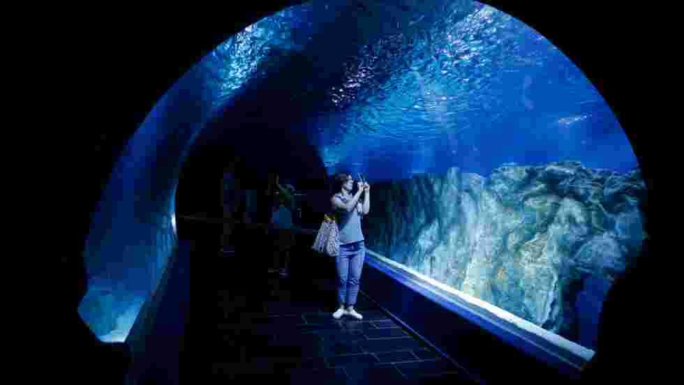 Un aquarium géant va bientôt ouvrir ses portes à Jérusalem