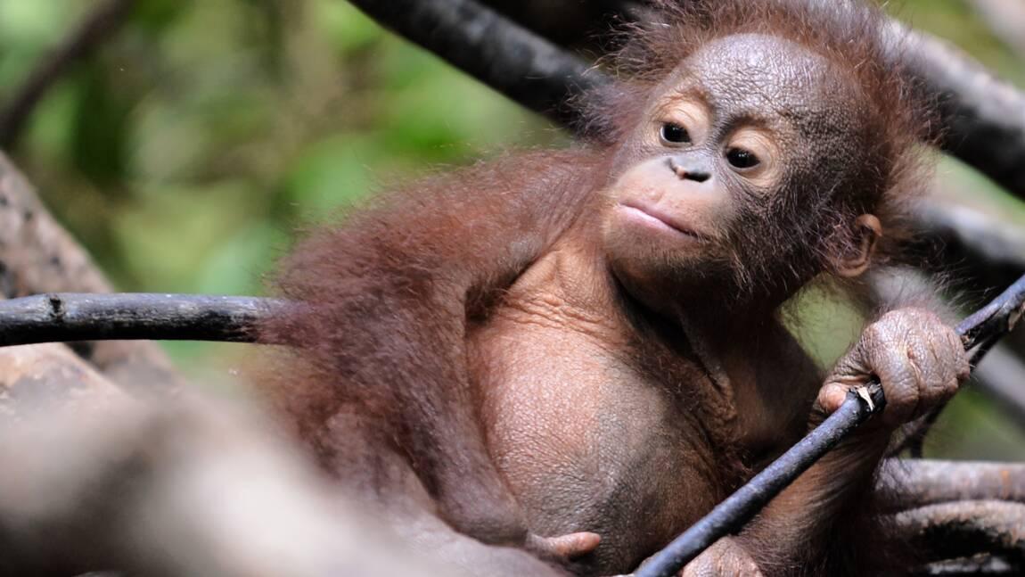 L'état préoccupant de la biodiversité en chiffres