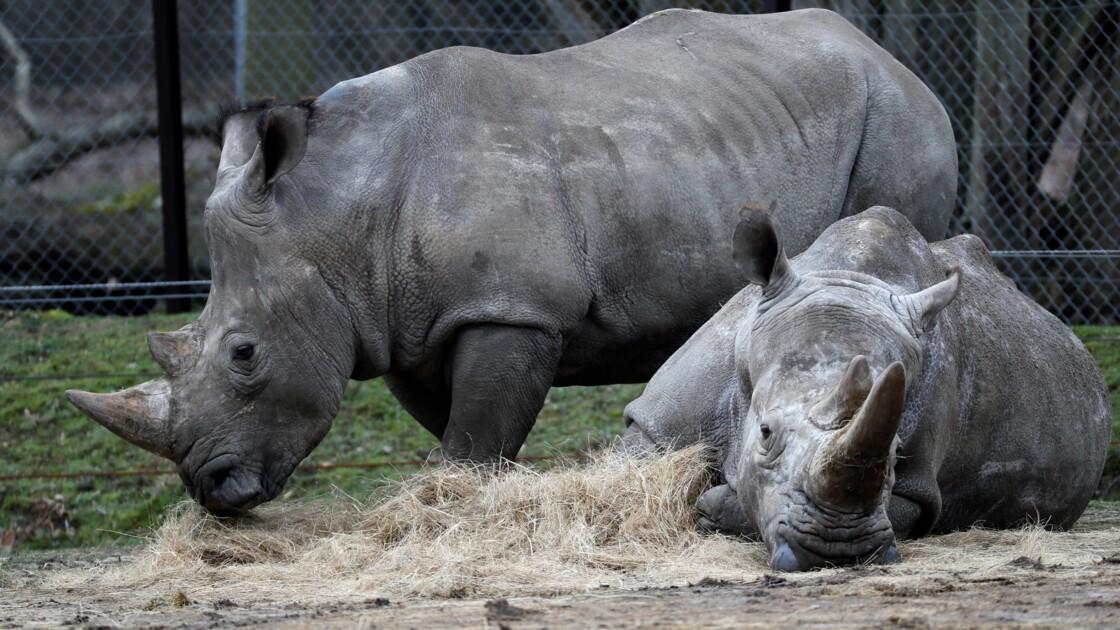 Si les zoos ne se protègent pas mieux, le braconnage continuera