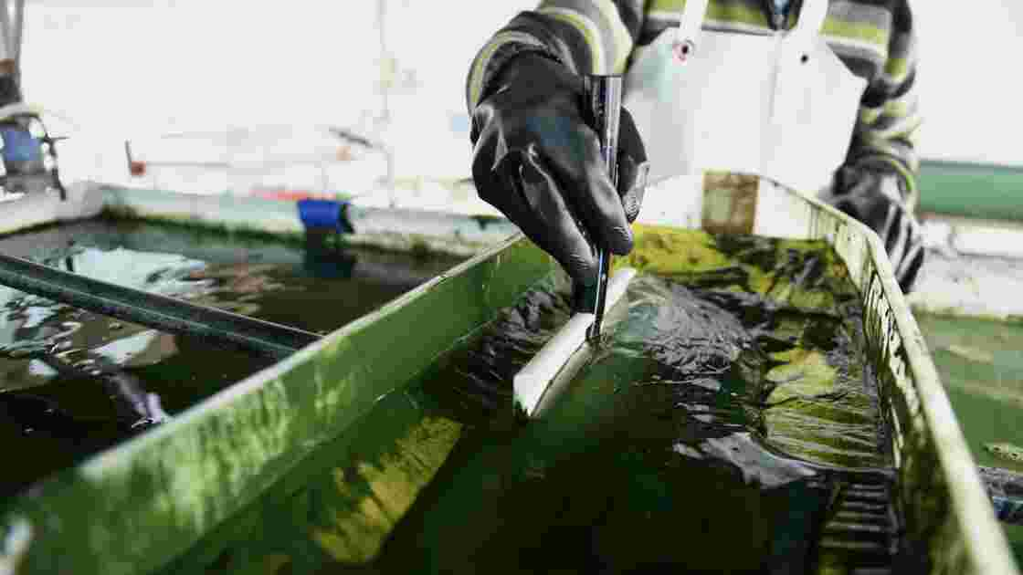 Une ferme géante de micro-algues de 32 ha en construction en Bretagne