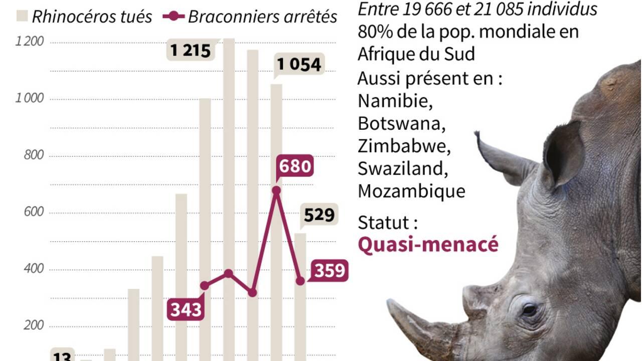 Cornes de rhinocéros aux enchères, une vente très controversée