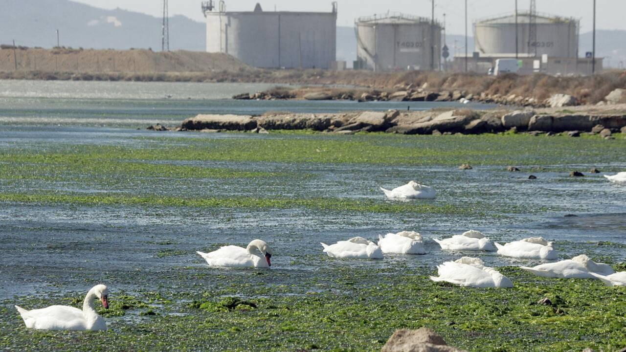 Royal veut relancer un projet pour réhabiliter l'étang de Berre
