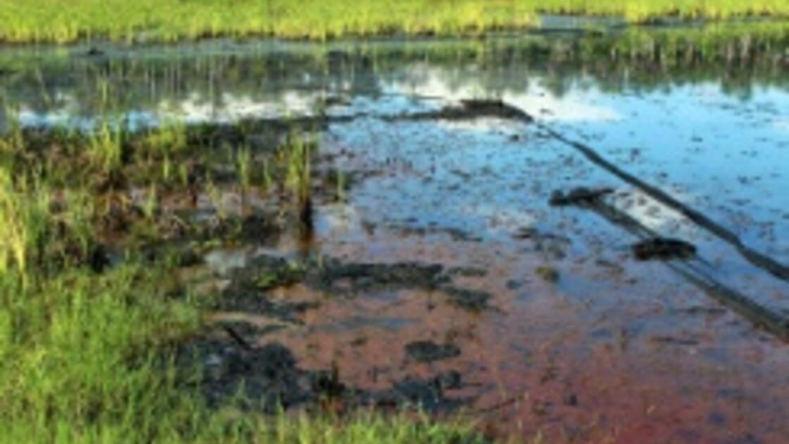 Bassin amazonien : de forts taux d'arsenic dans l'eau des puits