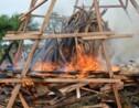 Cri d'alarme pour l'éléphant de forêt d'Afrique centrale