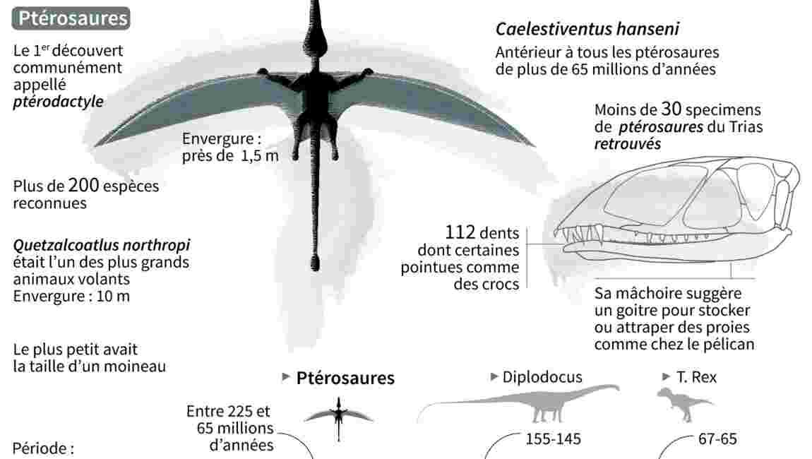 """Découverte d'un vieux ptérosaure, premier vertébré """"construit"""" pour voler"""