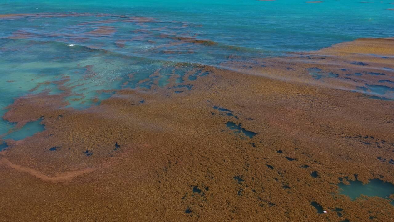 Guadeloupe: Hulot annonce un plan sargasses de 10 milions d'euros
