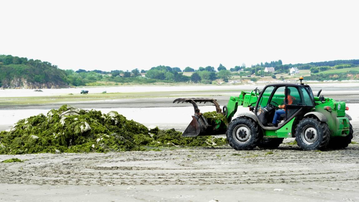 Algues vertes en Bretagne : l'Etat condamné à verser plus de 500 000 euros à Saint-Brieuc