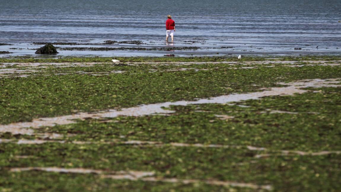 Algues vertes/décès d'un joggeur en baie de St-Brieuc: enquête classée sans suite