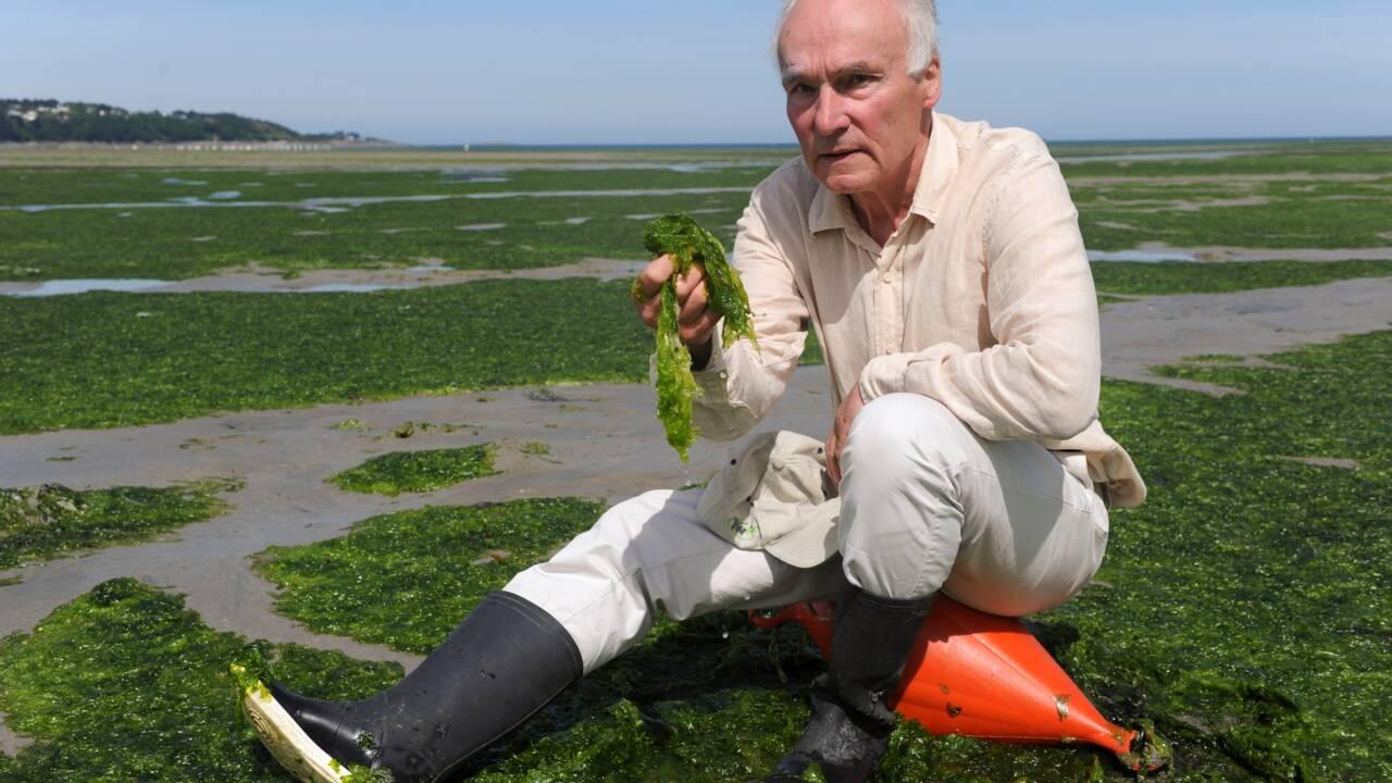 """Lutte contre les marées vertes: """"les derniers kilomètres les plus durs"""""""