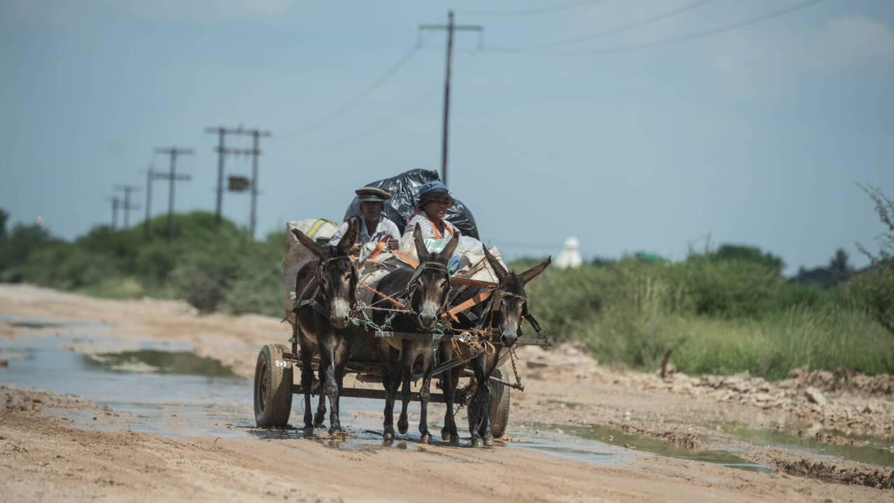 Après l'ivoire, la peau des ânes africains au coeur d'un trafic meurtrier