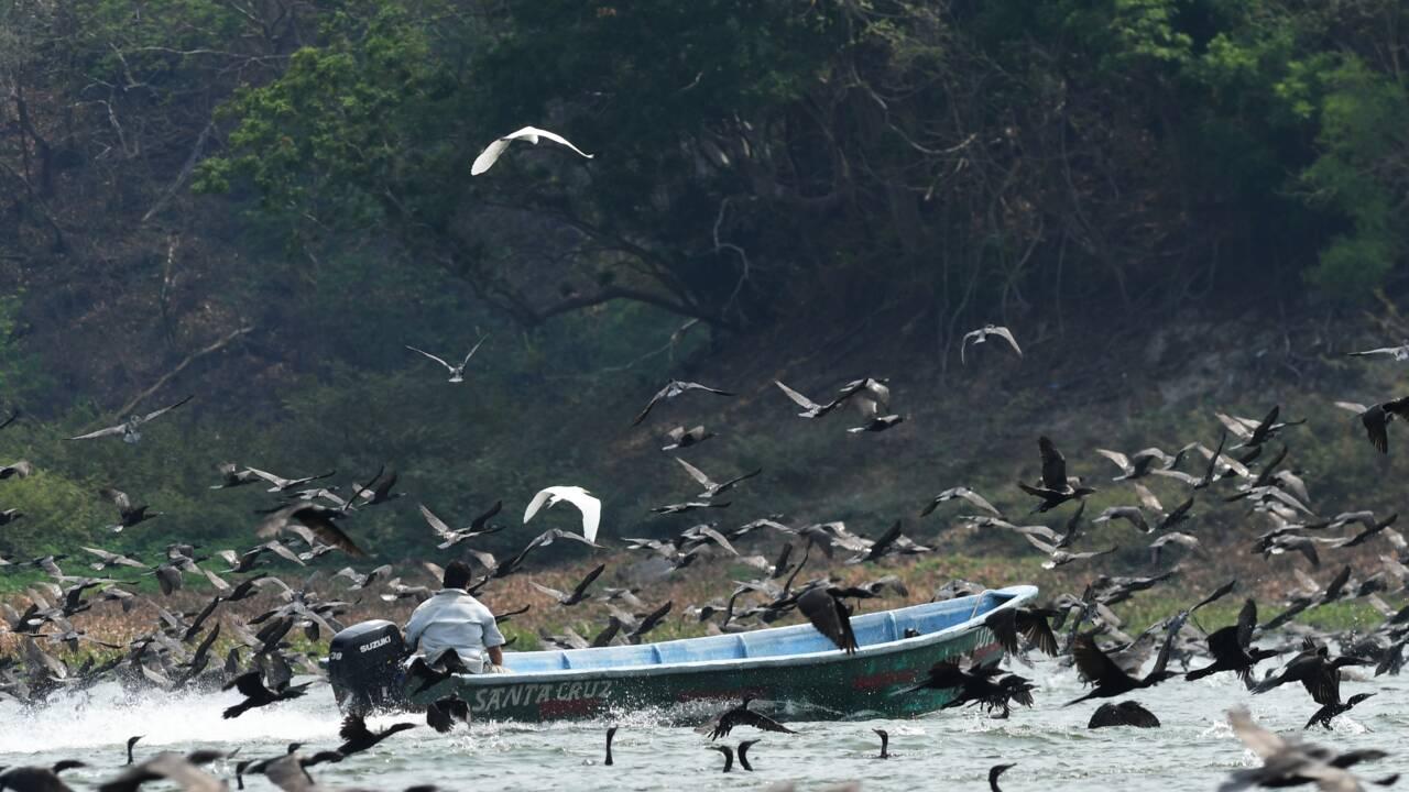 Au Salvador, la bataille pour le poisson entre cormorans et pêcheurs