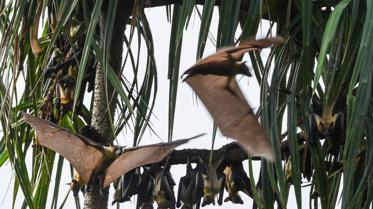 Côte d'Ivoire: chauves-souris, varans... et canons aux îles Ehotilé