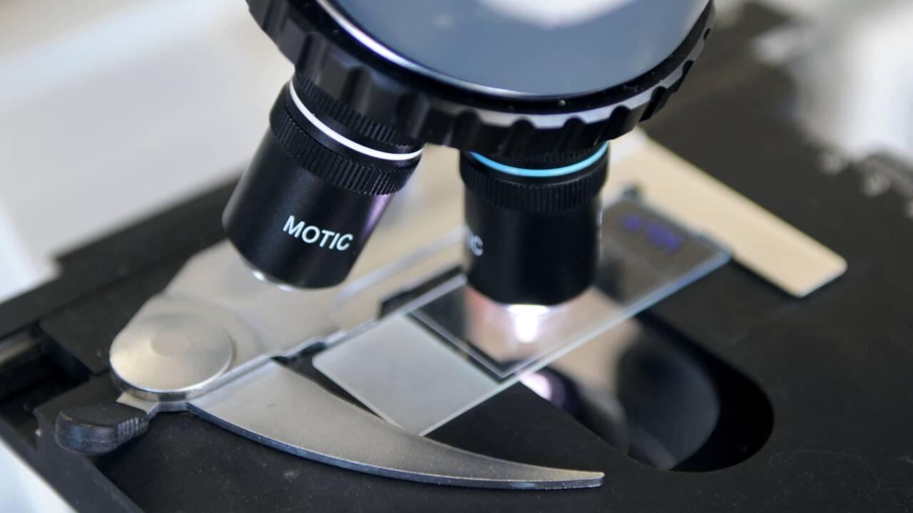 Sclérose en plaques: la piste de la réparation des neurones