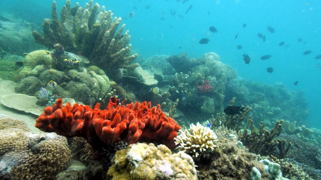 Philippines: un projet de parc à thème sous-marin à Palawan