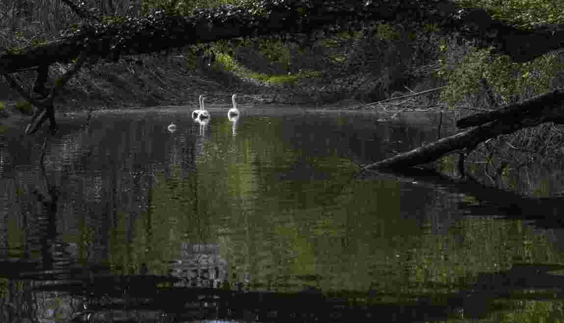 """Réhabilitées, les lônes redeviennent les """"réservoirs d'espèces"""" du Rhône"""