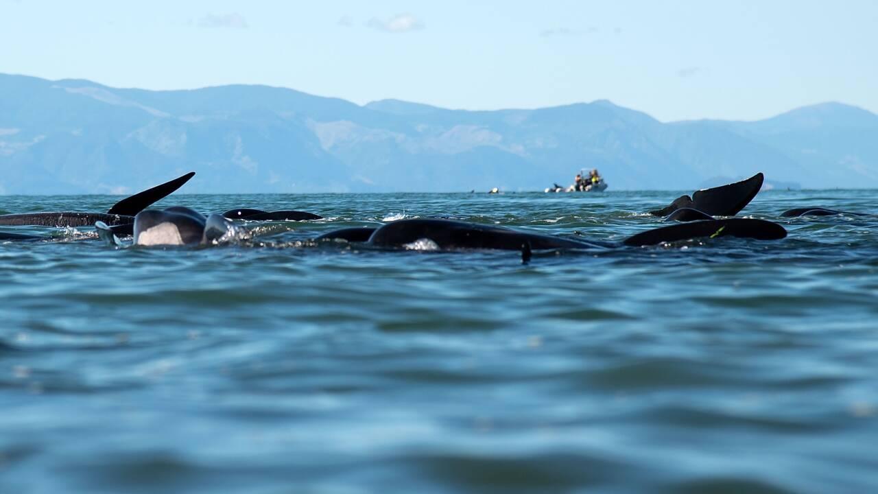 Danger mercure! La viande de dauphin pilote indésirable dans les assiettes