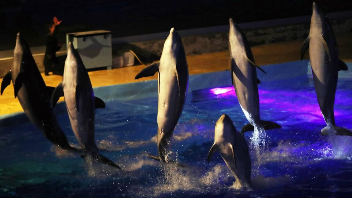 Le Conseil d'Etat maintient l'interdiction de la reproduction des dauphins en captivité