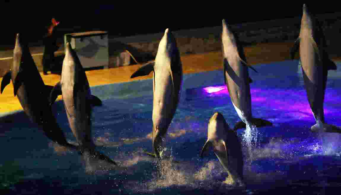 La reproduction des dauphins et orques en captivité interdite en France