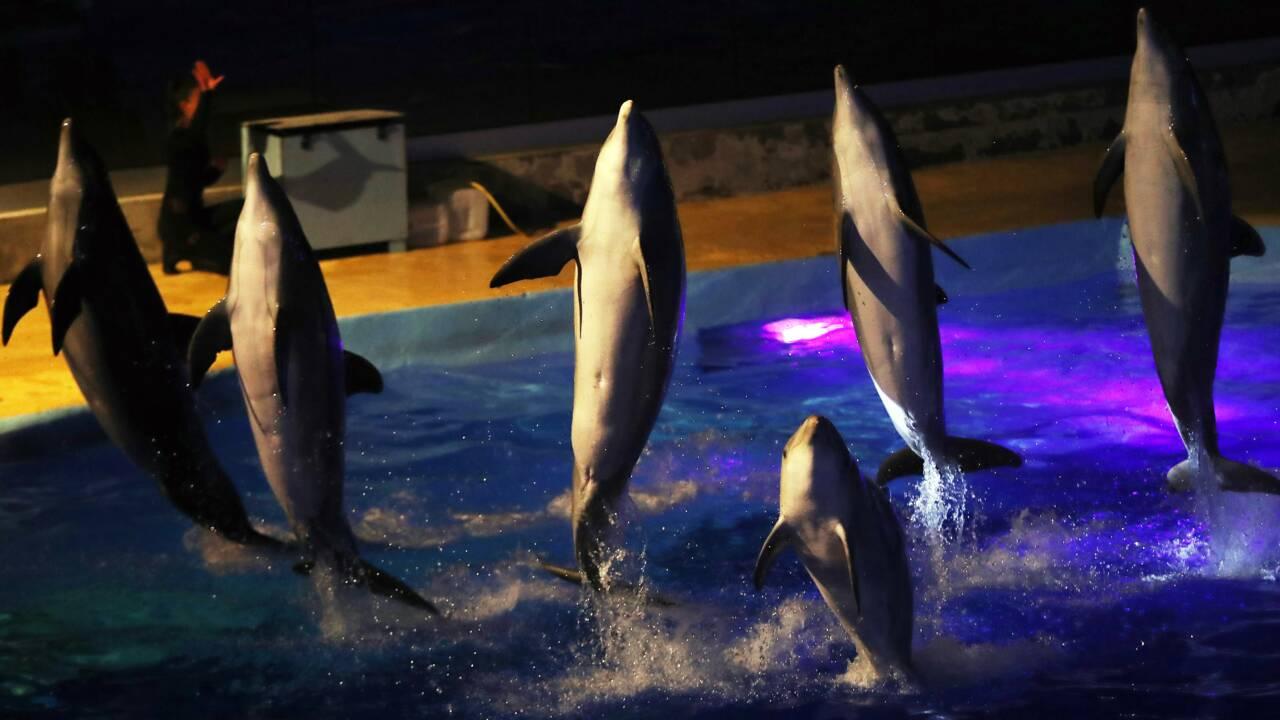 Reproduction des dauphins en captivité: décision mardi du Conseil d'Etat