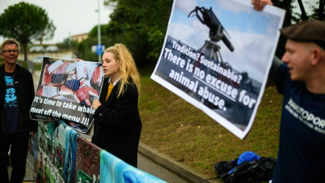 Les pays chasseurs de baleines torpillent une proposition de sanctuaire