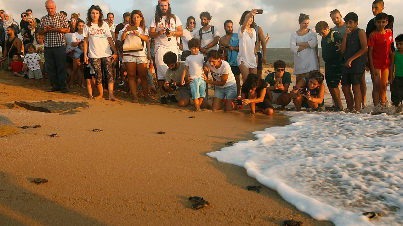 Liban: 200 bébés tortues rejoignent la mer, une ONG veut sensibiliser le public