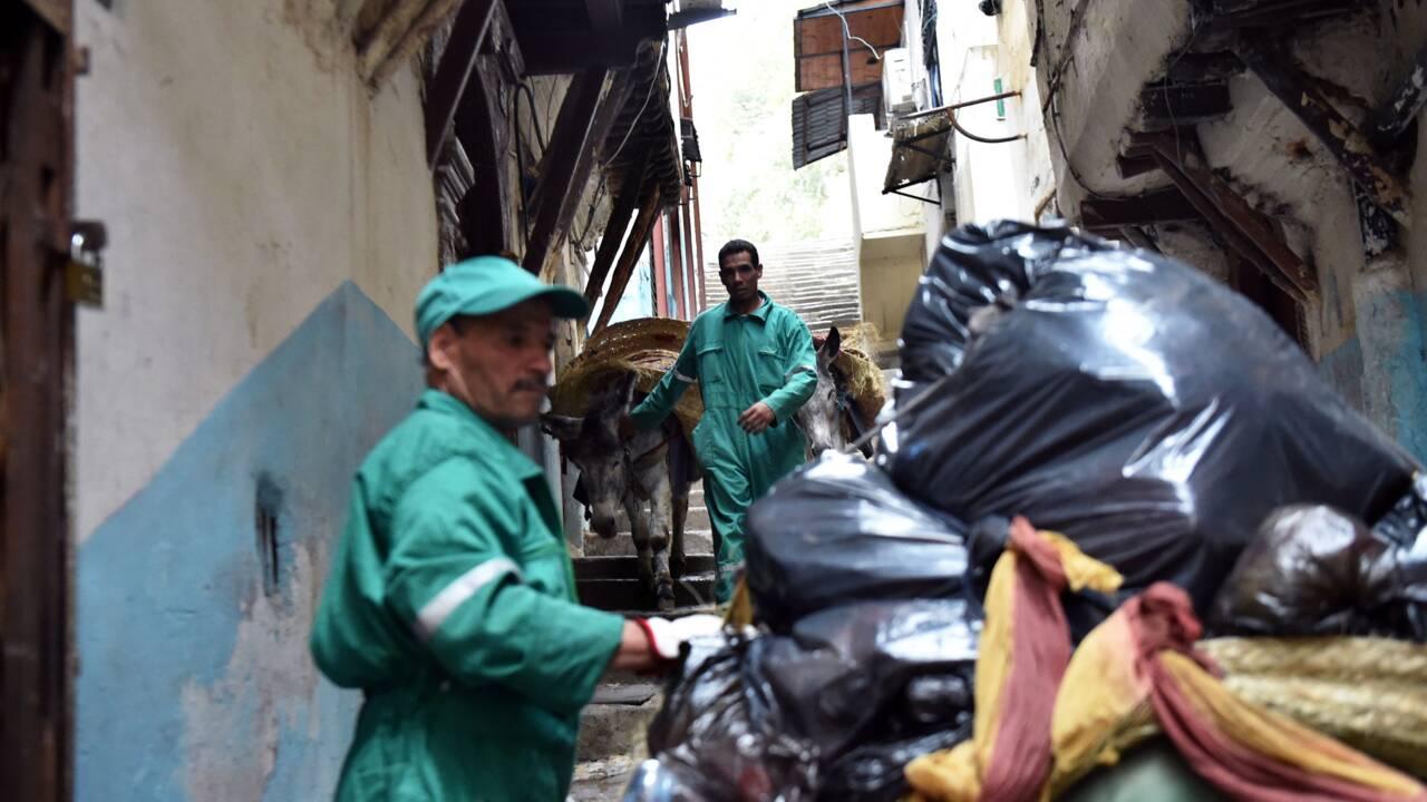 """A Alger, l'âne, """"camion-poubelle"""" de la Casbah depuis cinq siècles"""