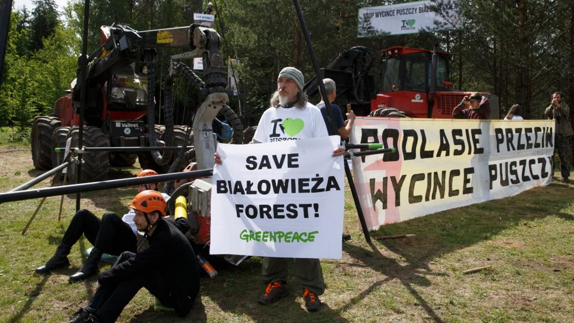 Pologne: des écologistes bloquent la coupe des arbres à Bialowieza