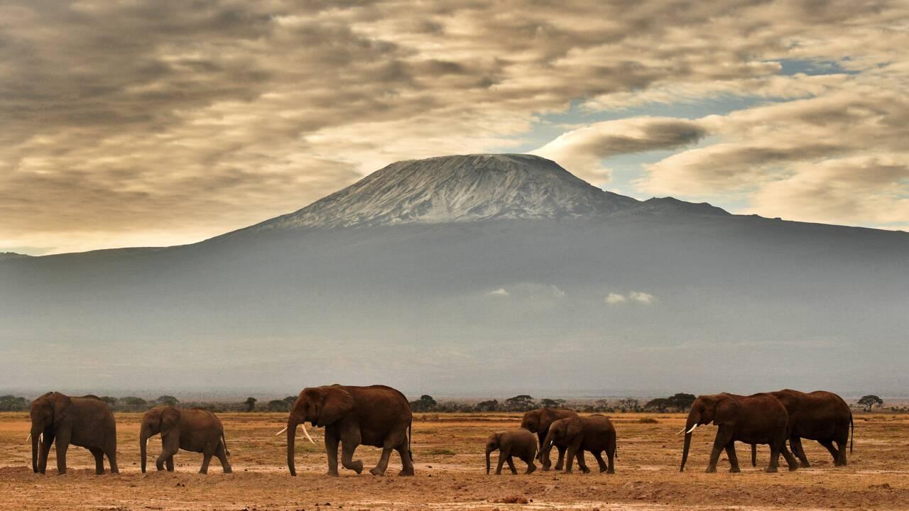 L'Homme commence à prendre au sérieux le massacre des éléphants
