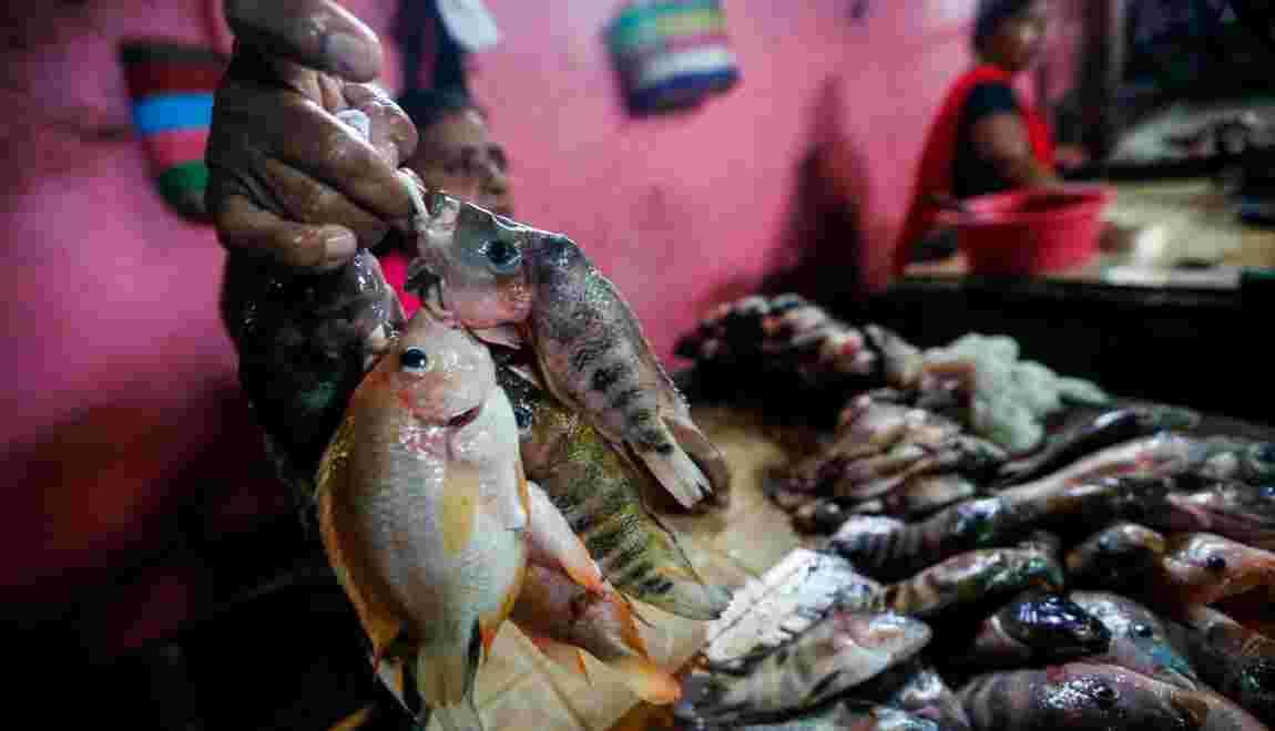 Au Nicaragua, des habitants réduits à manger le poisson d'un lac pollué