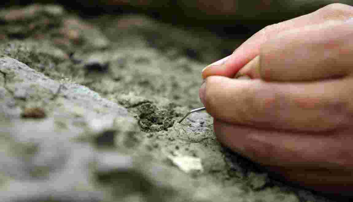 Des fossiles de 3,5 milliards d'années, plus vieille trace confirmée de vie terrestre