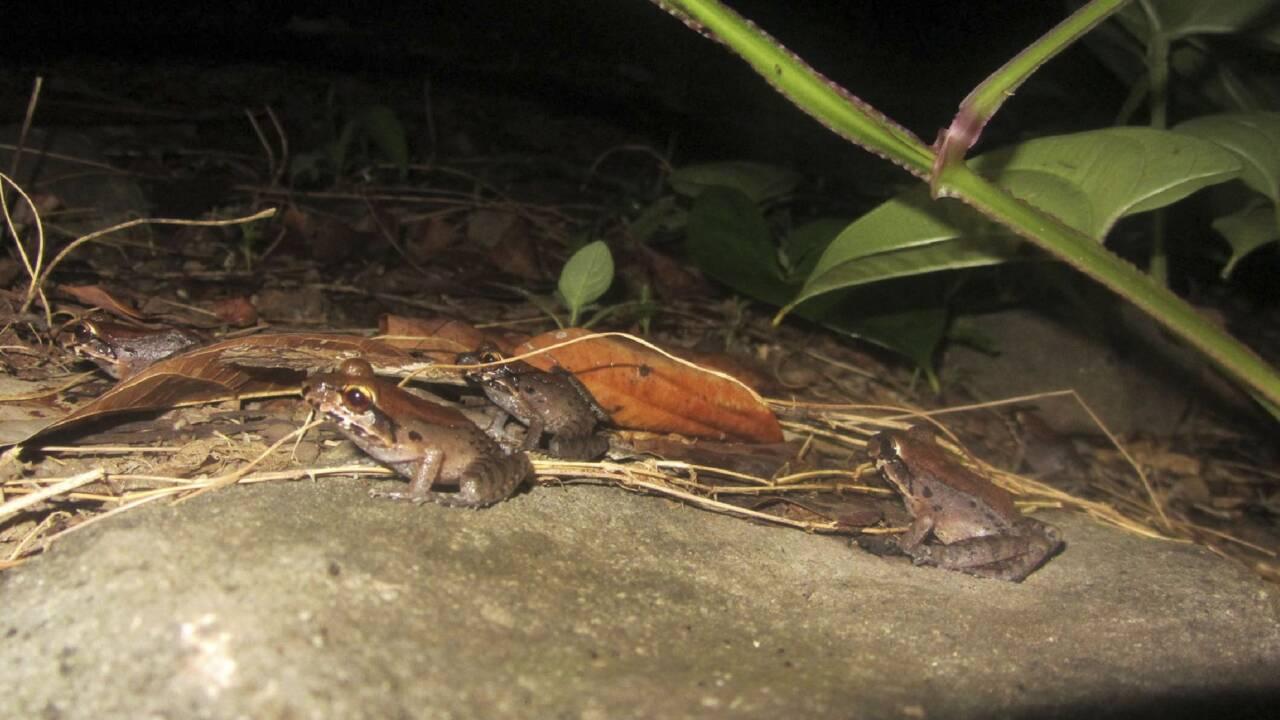 Un an après l'ouragan Maria, la faune de la Dominique toujours très fragile