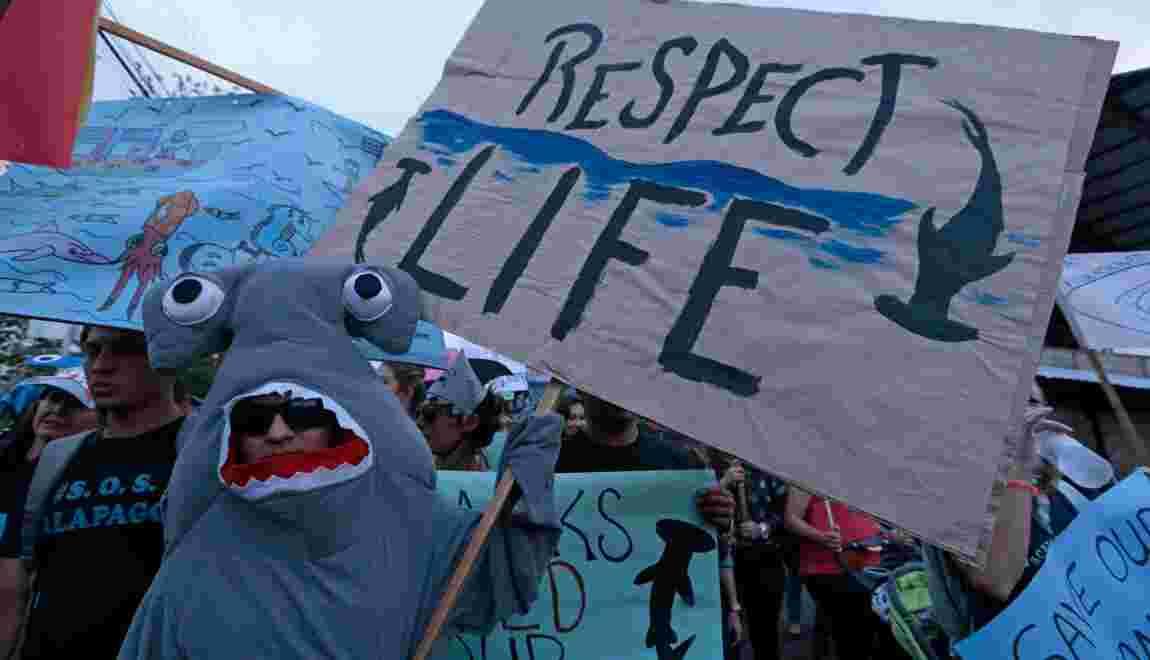 Pêche illégale aux Galapagos: prison et amende confirmées en appel