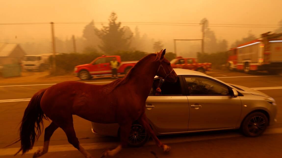 Le Chili ravagé par les feux de forêt