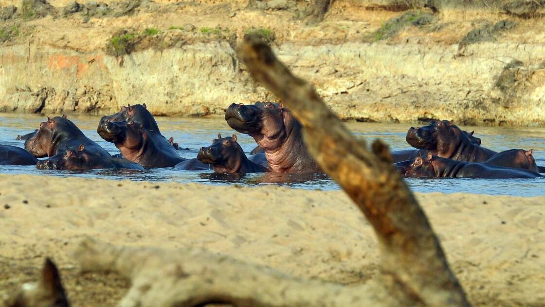 """Milices et braconniers exercent une """"pression énorme"""" sur la faune d'Afrique centrale"""