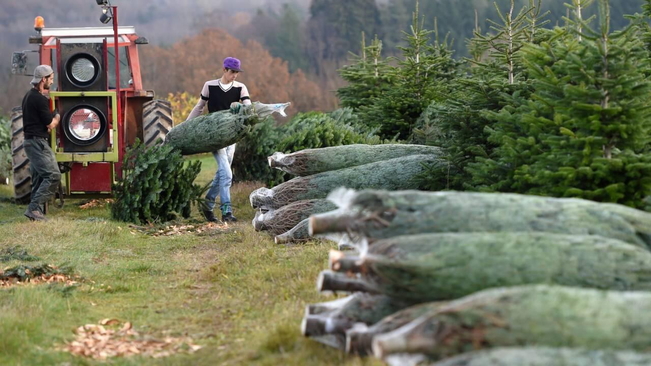 Du sapin aux cadeaux, les réflexes pour un Noël plus vert