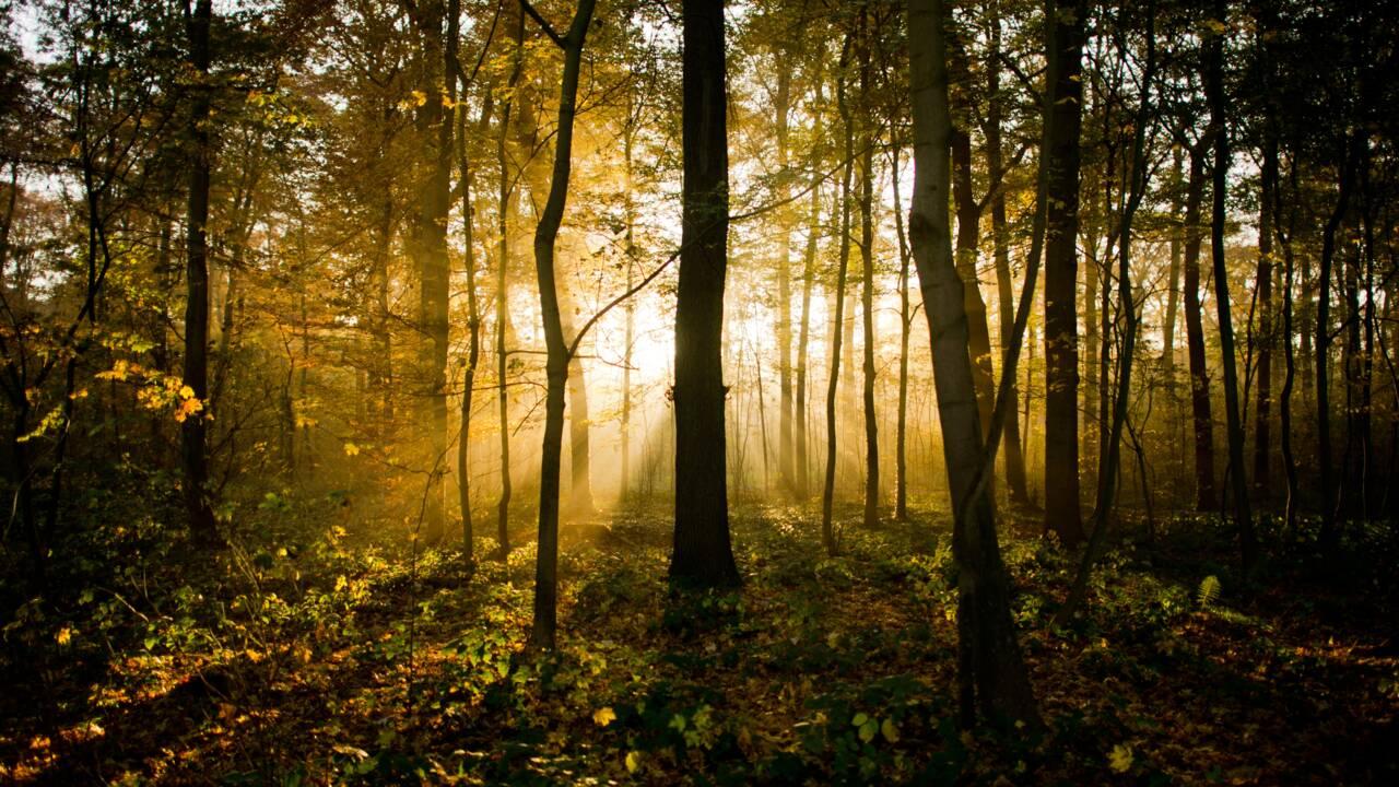 Pologne : le ministre autorise l'abattage d'arbres, on coupe chez lui