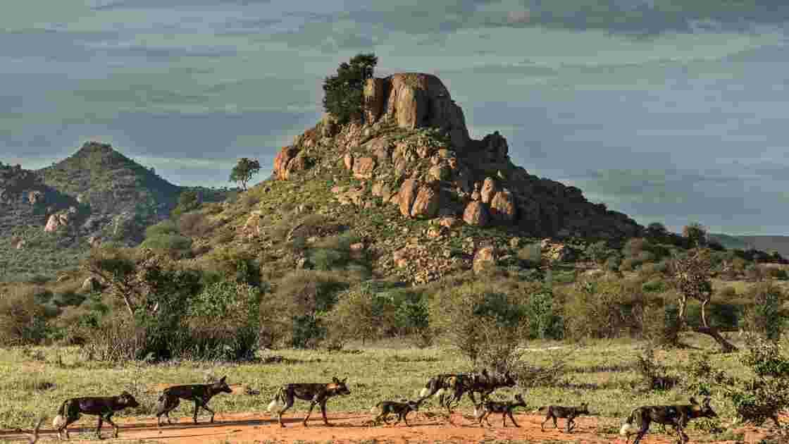 Kenya : la faune sauvage décimée par des intrusions dans des réserves privées