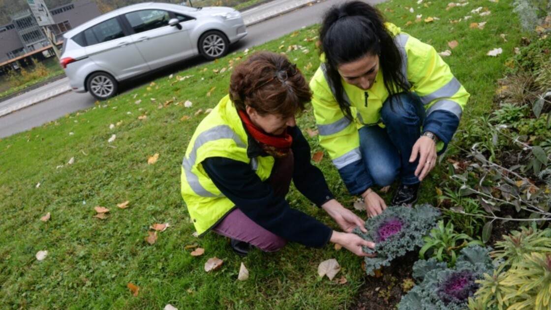 Besançon: des choux pour mesurer la pollution