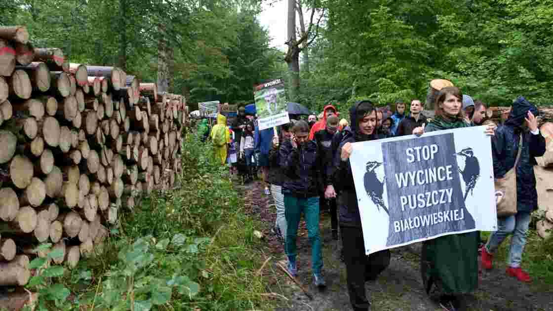 Forêt de Bialowieza: Pologne et Commission à la barre de la Cour de justice de l'UE
