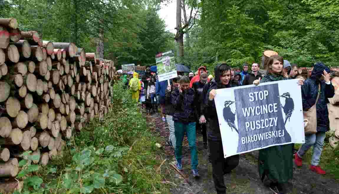 Pologne: Greenpeace renforce ses effectifs pour freiner les coupes dans la forêt de Bialowieza