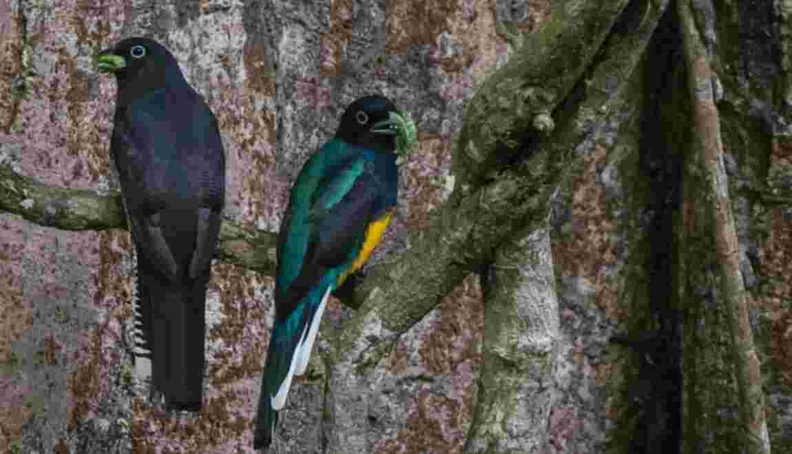 Deux cents espèces d'oiseaux à risque d'extinction non listées