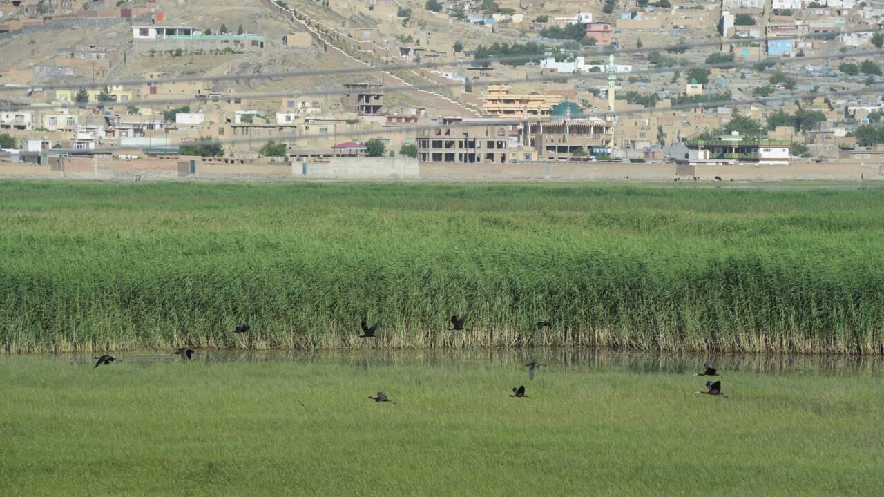 A Kaboul, une étape protégée sur la route des oiseaux migrateurs