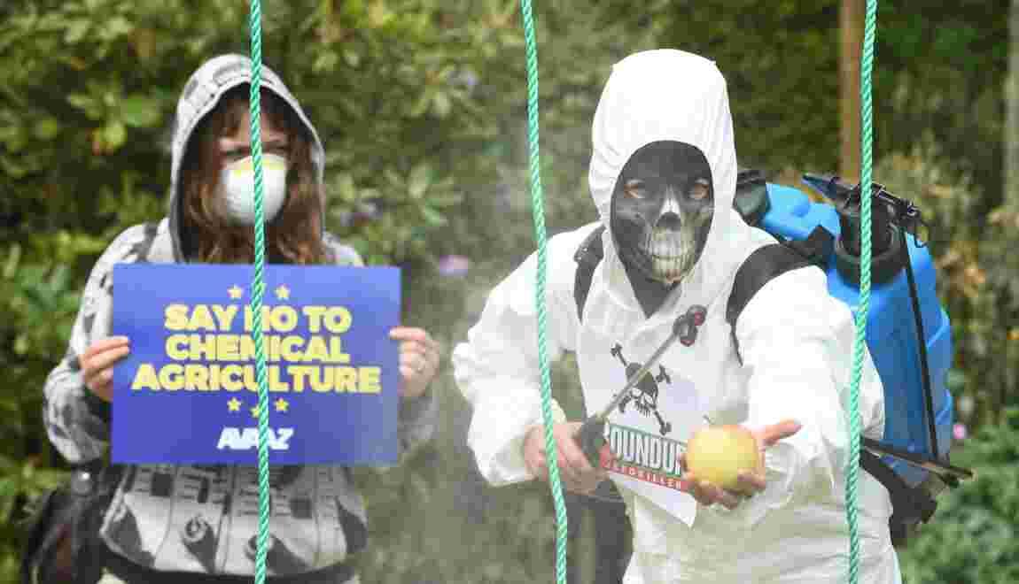 Glyphosate: une étude écarte le risque cancérogène, l'UE tranchera
