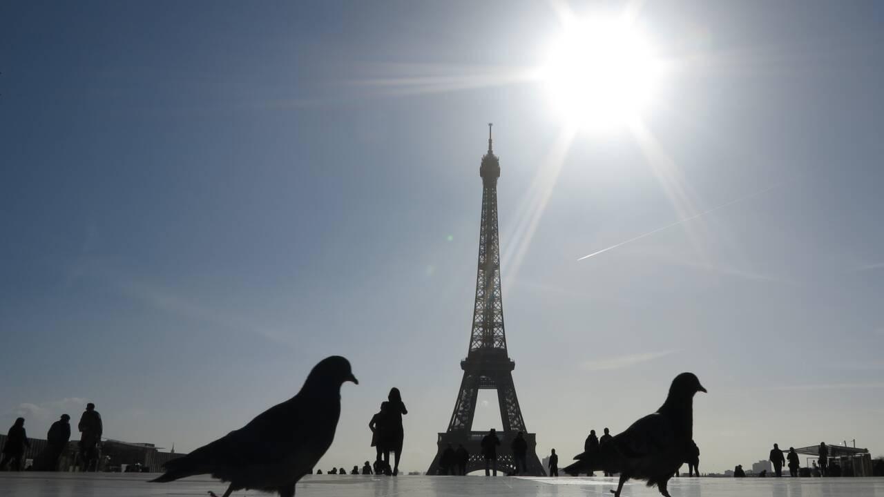 Chez les oiseaux, un cerveau volumineux permet d'éviter les voitures