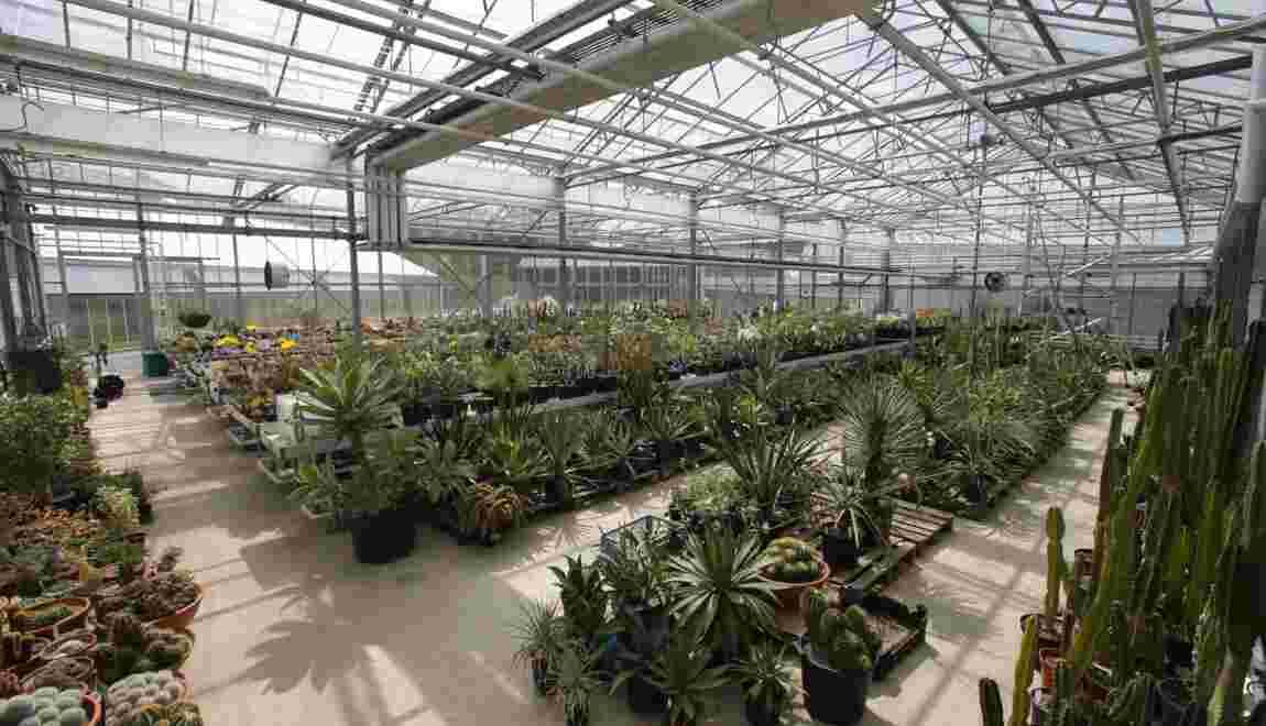 Santé: plus de 28.000 plantes ont des propriétés médicinales