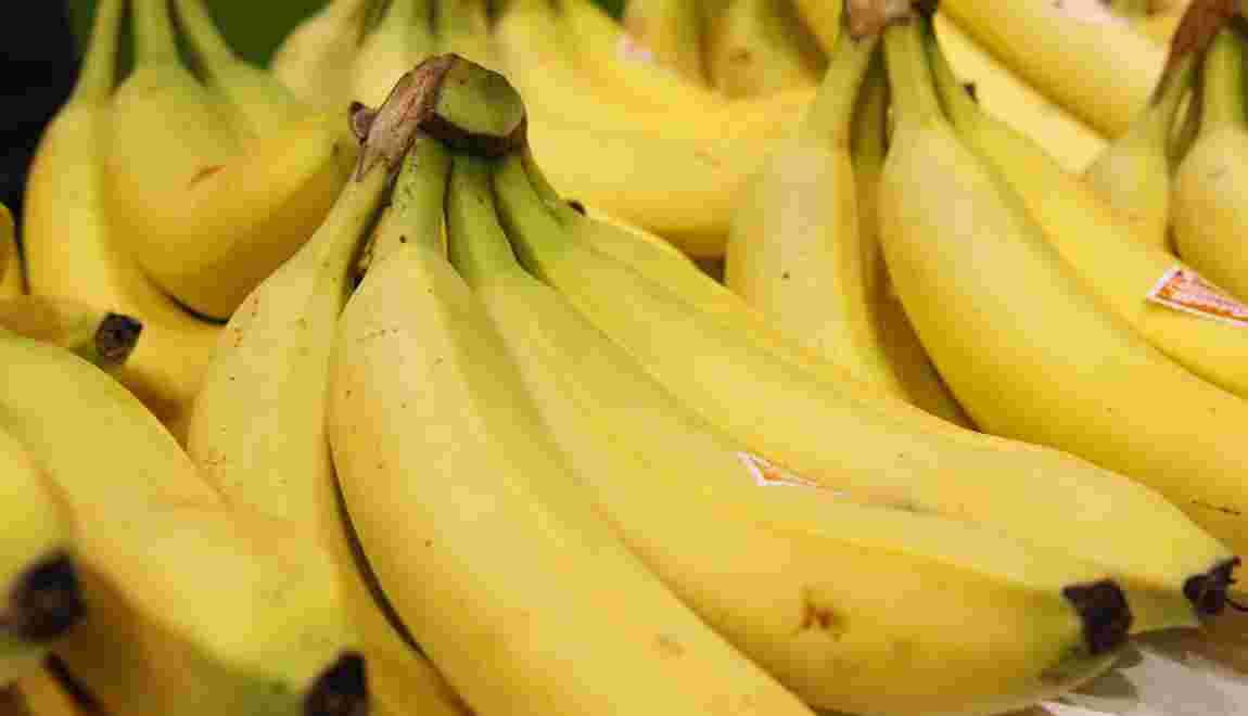 """Les producteurs antillais de bananes dénoncent des """"fausses"""" bananes bio"""