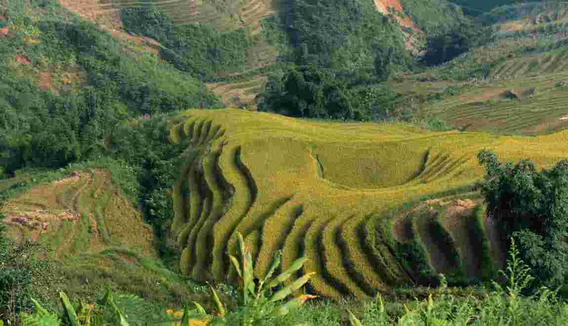 Plus de CO2 dans l'air, moins de nutriments dans le riz